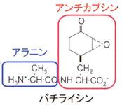 http://www-cc.gakushuin.ac.jp/~19910112/bacilysin.jpg